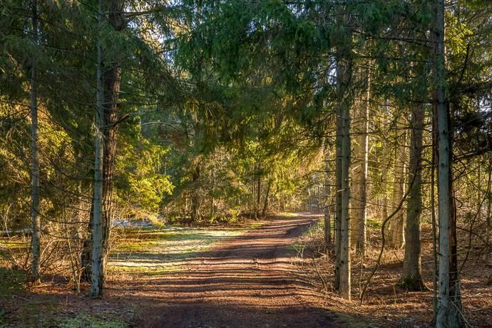 Bild: 0 rum tomt på Gothem Nybingels 589, Gotlands kommun Gothem hammar