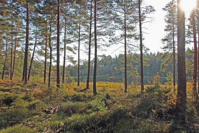 Bild: gård/skog på Nickelsbo 102, Hylte kommun