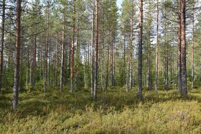 Bild: gård/skog på Kukkola, Haparanda kommun