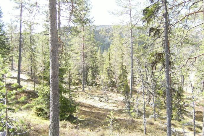 Bild: tomt på Gränjesåsvallen, Älvdalens kommun