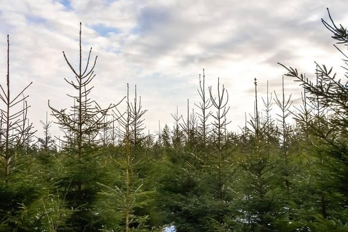 Bild: gård/skog på Bolberöd, Hässleholms kommun Verum