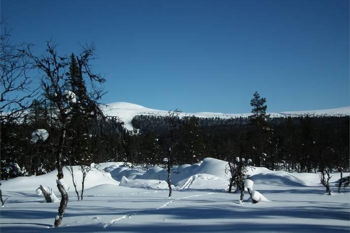 Bild: tomt på Grövelsjön -Övre Storsäterns tomtområde etapp 2 : TJÄRN, Älvdalens kommun Grövelsjön