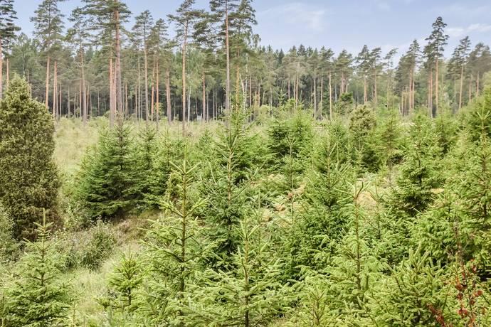 Bild: gård/skog på Örkelljunga Fagerhult 1:67 m.fl., Örkelljunga kommun