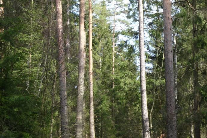 Bild: gård/skog på Älmö 2:2, Hylte kommun Drängsered