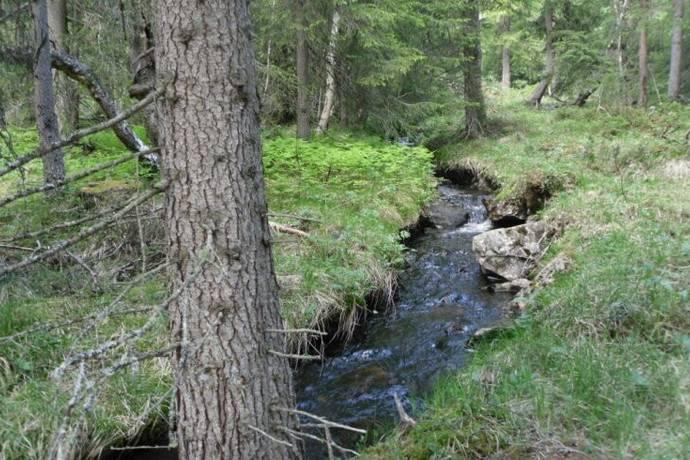 Bild: tomt på Ljungdalen, Bergs kommun Ljungdalen