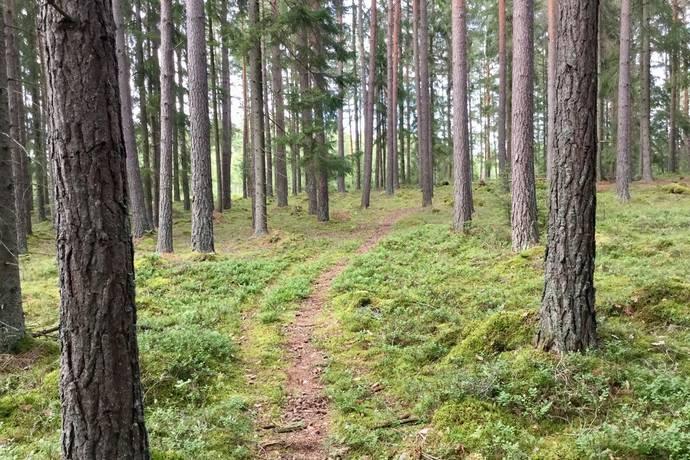 Bild: gård/skog på Torp 1:8 , Mariestads kommun Mariestad