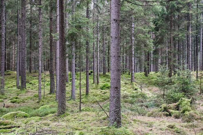 Bild: gård/skog på Bexet 202, Hylte kommun