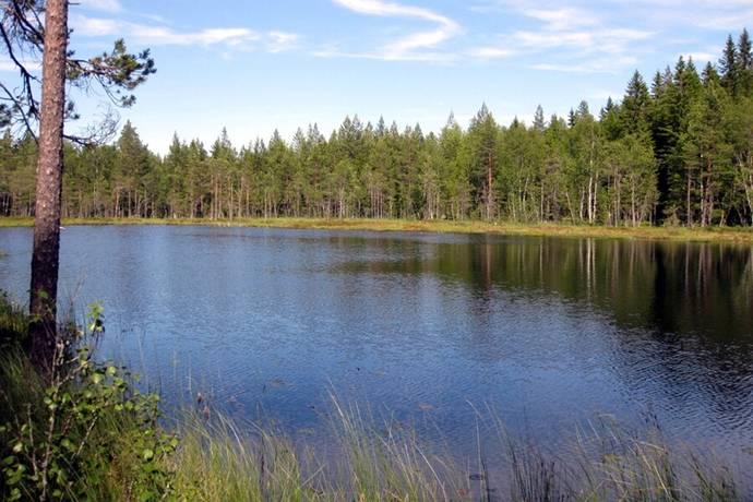 Bild: gård/skog, Mora kommun
