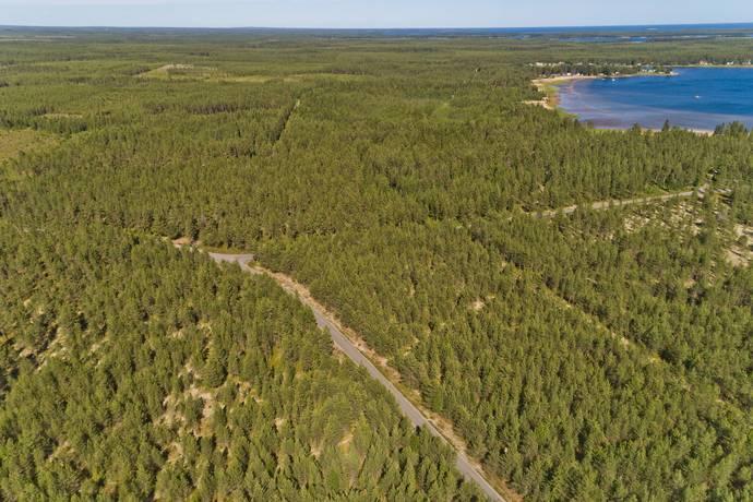 Bild: tomt på Kornhällan, Östanbäck, Skellefteå kommun Östanbäck