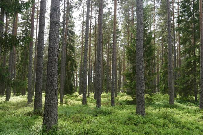 Bild: 128 m² gård/skog på Ålebäcksås 122, Lessebo kommun LESSEBO