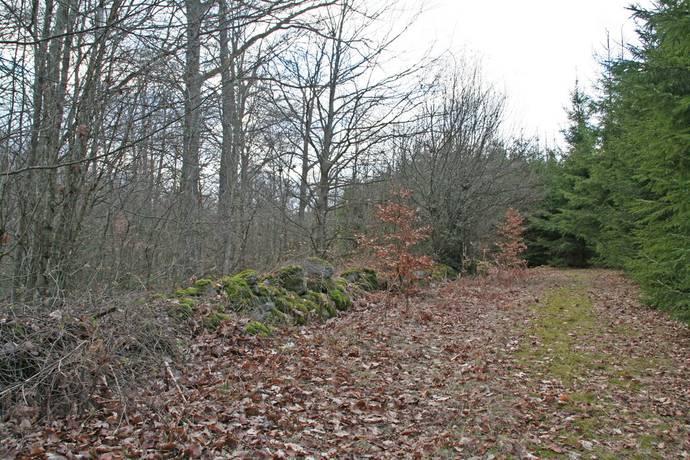 Bild: gård/skog på Norra Björstorp, Tomelilla kommun