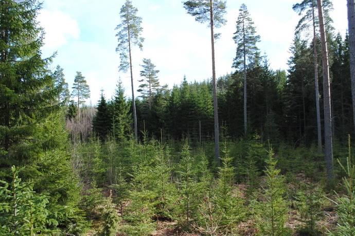 Bild: gård/skog på Ingebo 3, Oskarshamns kommun Bockara