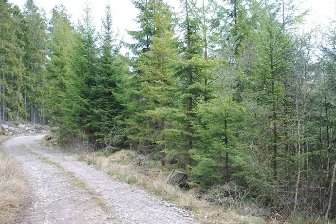 Bild: gård/skog, Markaryds kommun