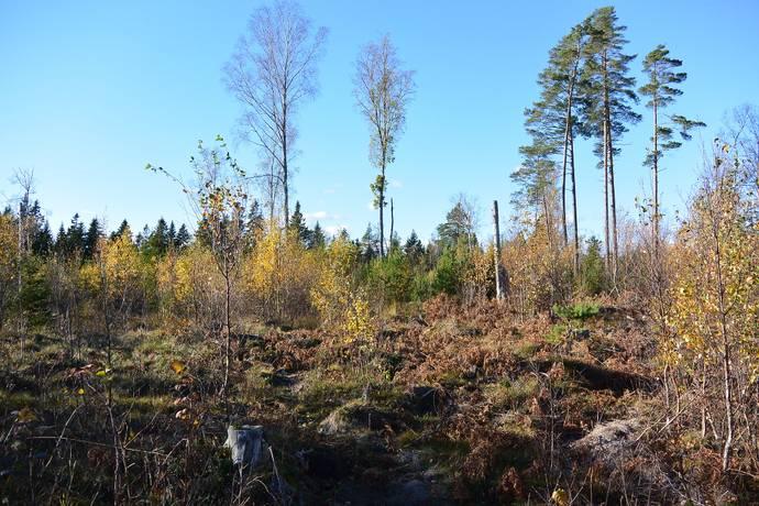 Bild: tomt på Roshöjden  16, Norrtälje kommun Gräddö - Fagervik