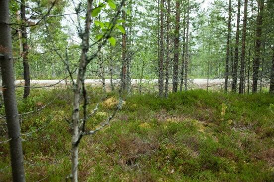 Bild: tomt på Lofssjön 129C, Härjedalens kommun Lofsdalen