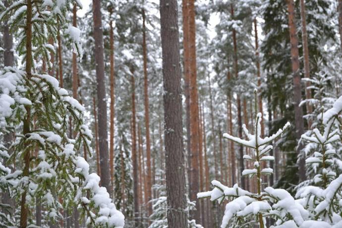Bild: gård/skog på Ålheden, Leksands kommun