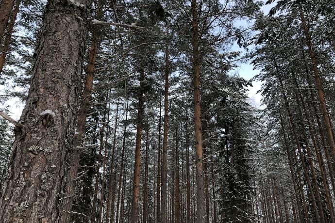 Bild: gård/skog på Färnäs 687:2, Mora kommun