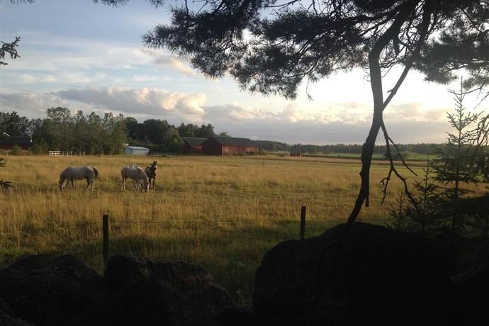 Bild: tomt på Tillinge Öndesta, Enköpings kommun Tillinge