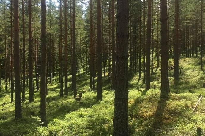 Bild: gård/skog på Skogsfastighet Finngärdet, Falu kommun Finngärdet