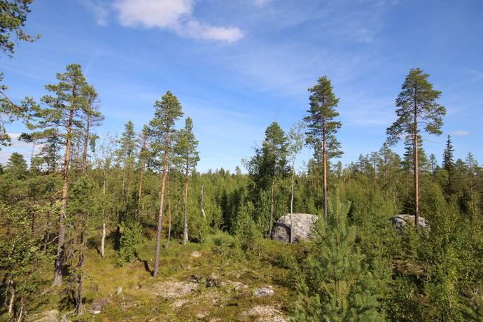Bild: gård/skog på Strömsund Bredgård 5:2, Strömsunds kommun Strömsund