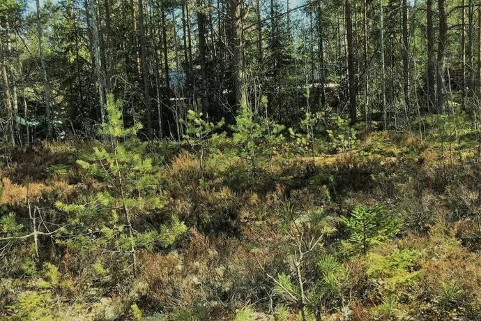 Bild: tomt på Öringstigen 15, Hudiksvalls kommun ENÅNGER
