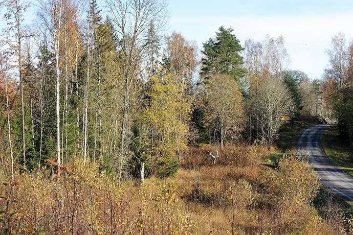 Bild: tomt på Norra Borgvik, Grums kommun Borgvik
