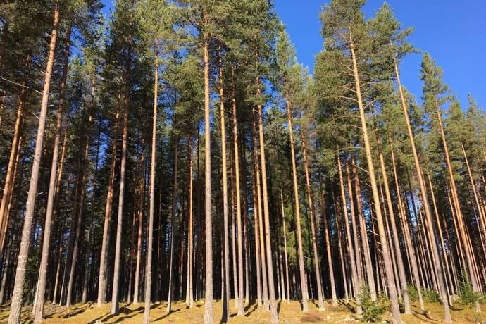 Bild: gård/skog på Skogsfastighet Gulleråsen, Rättviks kommun Gulleråsen