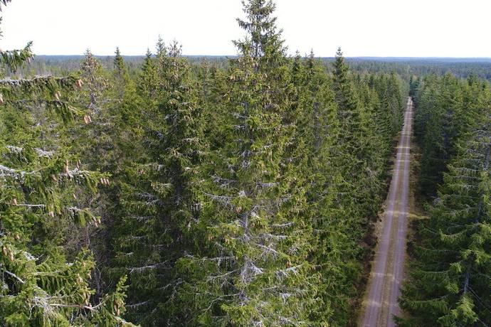 Bild: gård/skog, Uppvidinge kommun