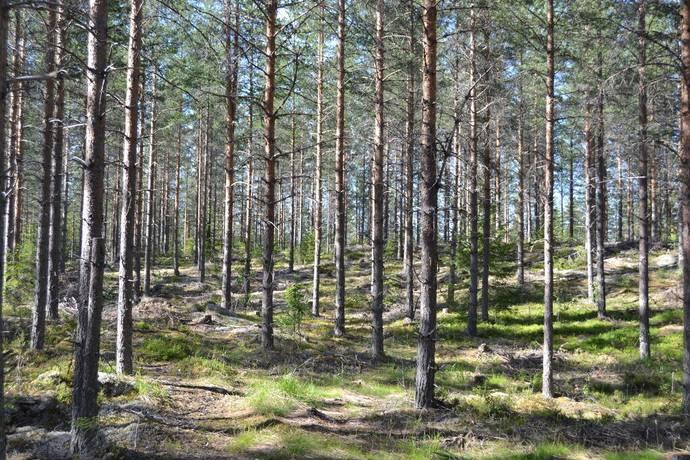 Bild: gård/skog på Skattungbyn, Orsa kommun Skattungbyn