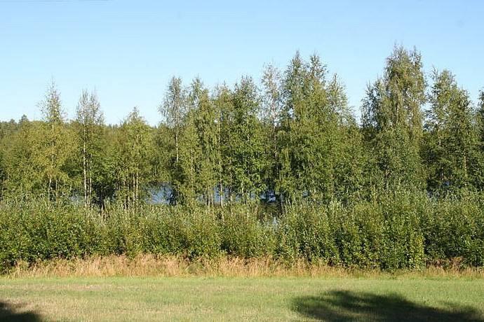 Bild: tomt på Siknäs, Kalix kommun Siknäs