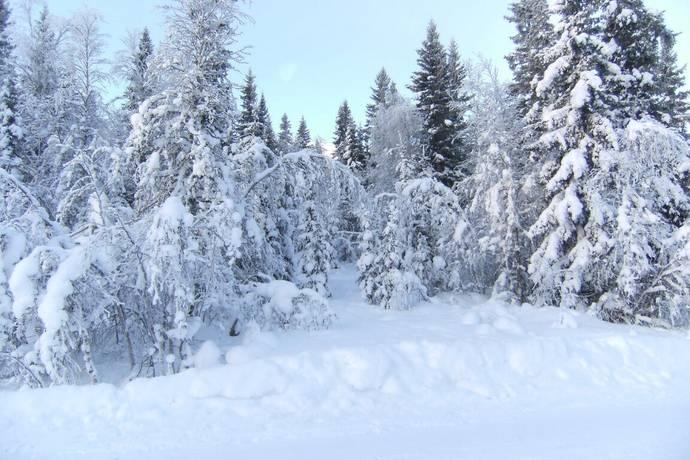 Bild: tomt på Mosippstigen 21, Älvdalens kommun Fjätervålen