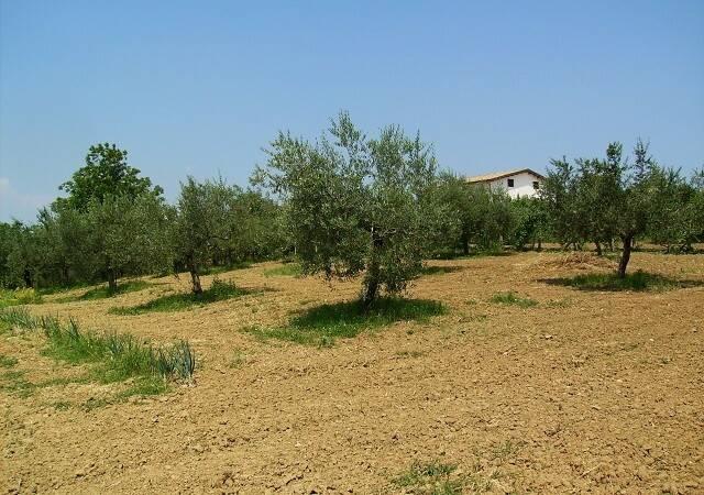 Bild: tomt på Montesilvano, Italien Abruzzo