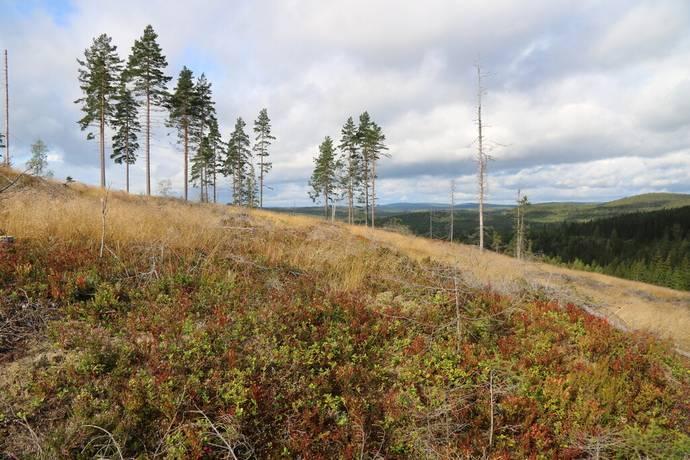 Bild: gård/skog på Borlänge, Borlänge kommun