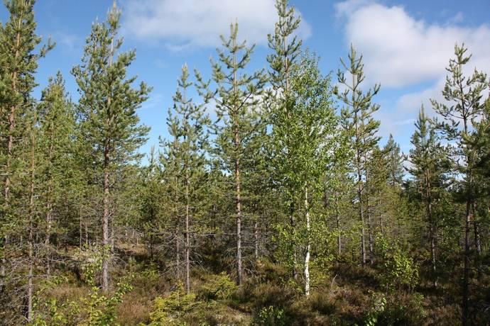 Bild: gård/skog på Vilhelmina Långtvist 1:6, Vilhelmina kommun